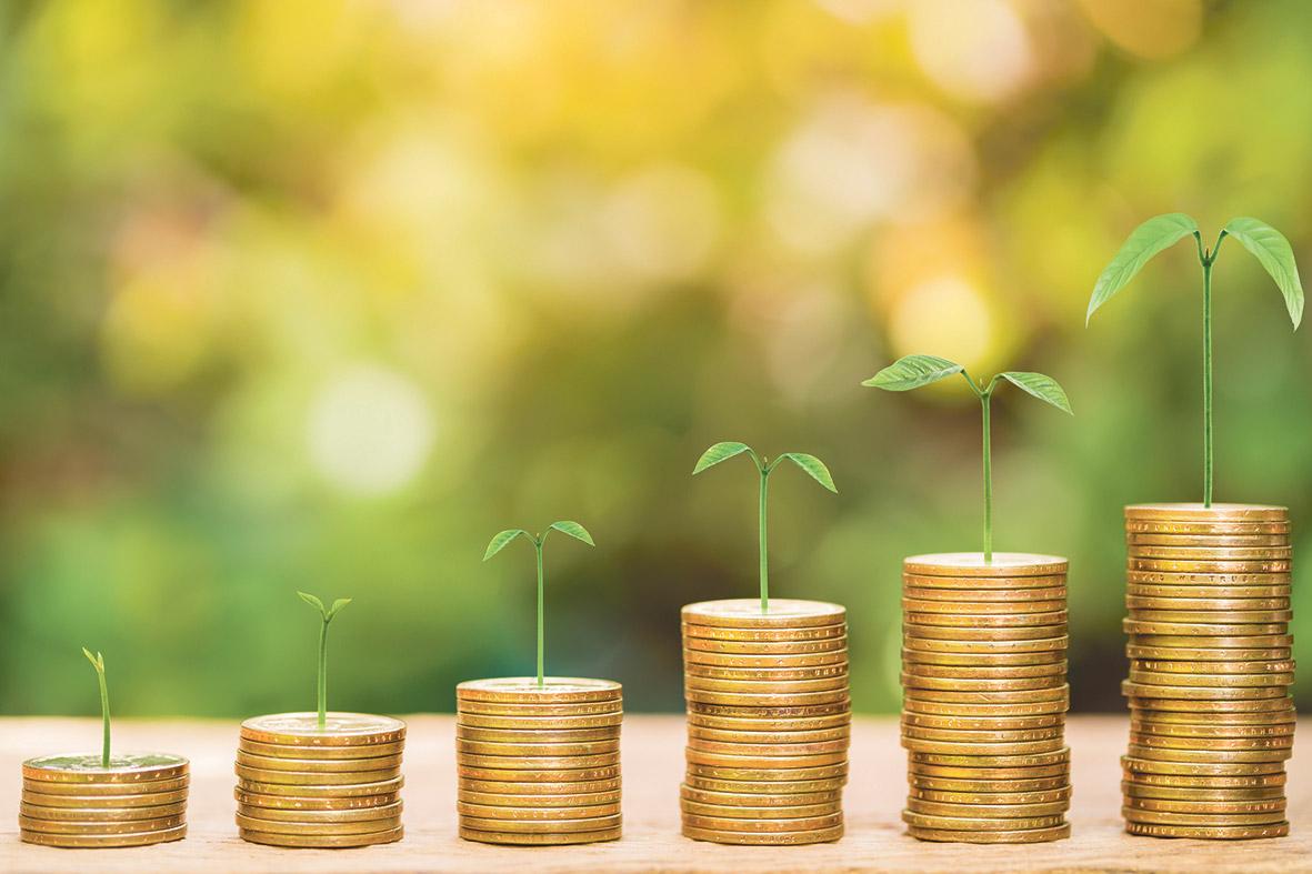 Geldmünzen liegen in Stapeln nebeneinander, darauf wachsen kleine Pflanzen