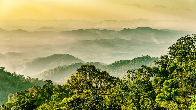 grüne Landschaft als Symbolbild für nachhaltige Goldproduktion